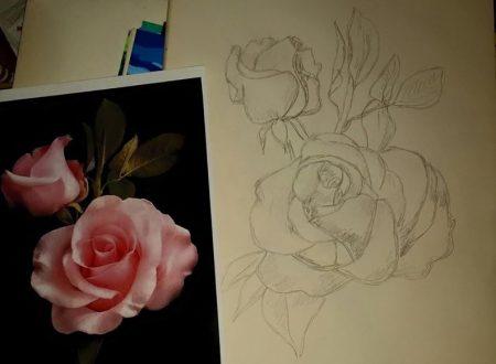 Rosa a matita.